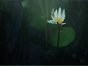 Lillumination