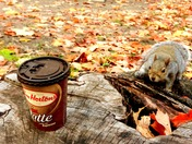 Tims Latte and  lovely squirrel!
