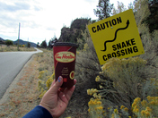 We Brake for Snakes in Canada's only Desert  while sipping a Timmy's!