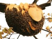 Beehive Honey Bees