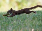 Squirrel Olympics