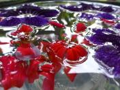 FLOWERS IN WATER, PURPLE & RED.