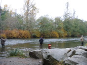 Salmon Fishing in the Puntledge River