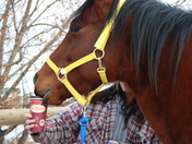 Alberta Appaloosa loves Tim's Tea!