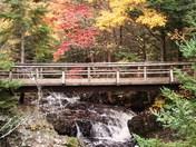 A Bridge in Fall