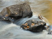 Rocks, leaves and flowing water