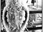 4c. Snowy Snout