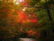 road during the fall -