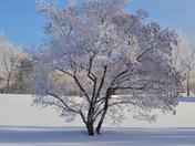 Beauty of Frost