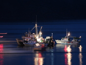 Night time fish boats