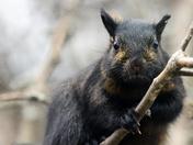 Very irritated squirrel