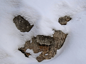 Face in the Snow