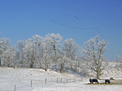 Frosty Paddock