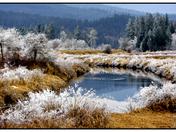 Cool Pond