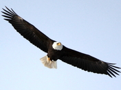 Eagle almost landed:)