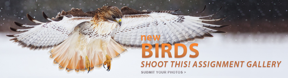 Shoot This: Birds