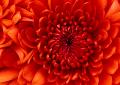 Verda's Flowers