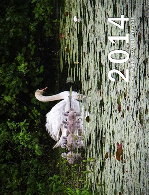 Swan Calendar
