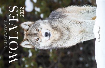 2022 Yellowstone Wolves Calendar