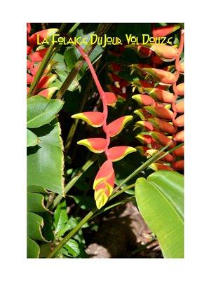 Les Foliage DuJour 12