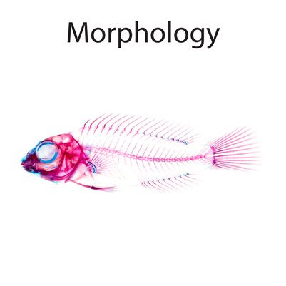 Morphology Booklet — DNA