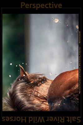 Perspective - Inspirational Poster - Salt River Wild Horses