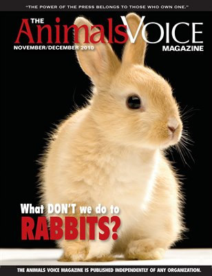 What DON'T We Do to Rabbits?