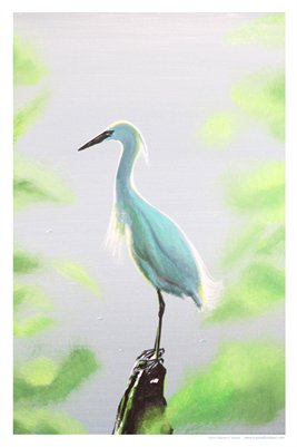 TROPICAL FLORIDA ART - EGRET PEACE 14