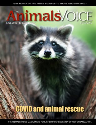 COVID and Animal Rescue