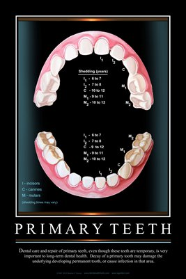 """PRIMARY TEETH"" - (black) Dental Wall Chart DWC301"
