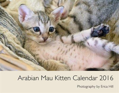 Arabian Mau Kittens 2016