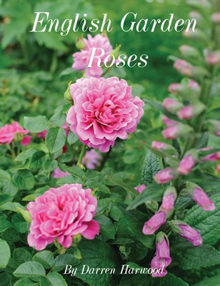 English Garden Roses - by Darren Harwood