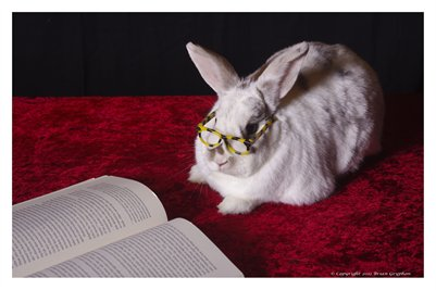 Rabbit Reading Room