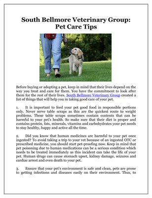 South Bellmore Veterinary Group: Pet Care Tips