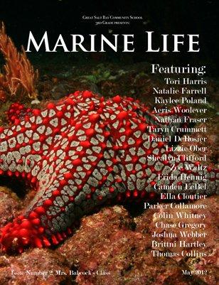 Mrs. Babcock's Marine Life 2012