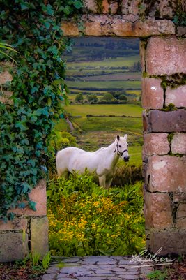 Horse in the Irish Countryside, Poster