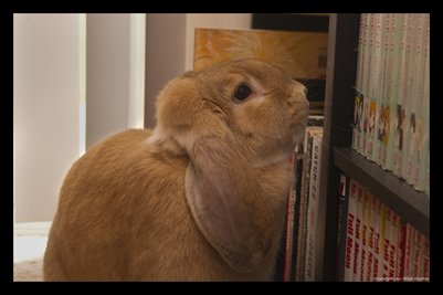 Reading Rabbit 2