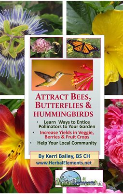 Attract Bees, Butterflies & Hummingbirds to Your Garden