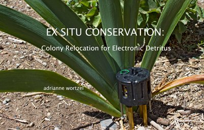 EX SITU: Colony Relocation For Electronic Detritus