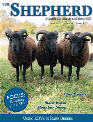The Shepherd January 2017
