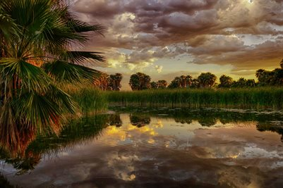 Agua Caliente Park #1
