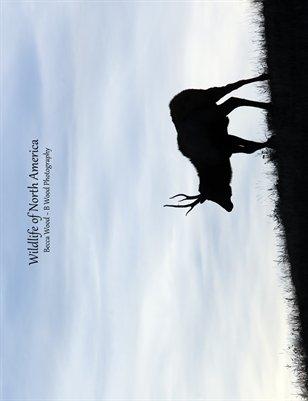 Wildlife of North America 8x10 Calendar