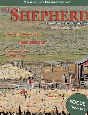 The Shepherd June 2016