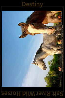 Destiny - Inspirational Poster - Salt River Wild Horses