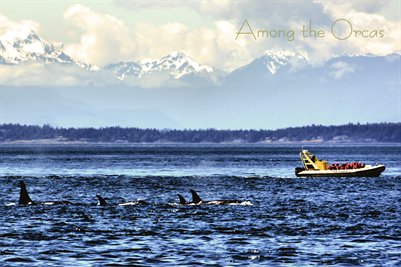 Among the Orcas