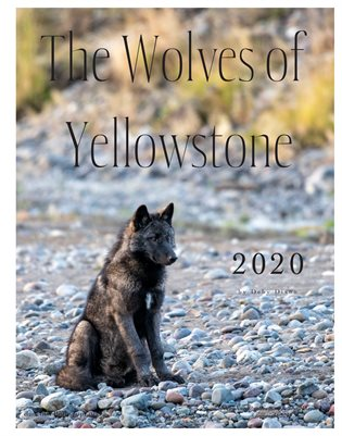 Wolves of Yellowstone Calendar 2020