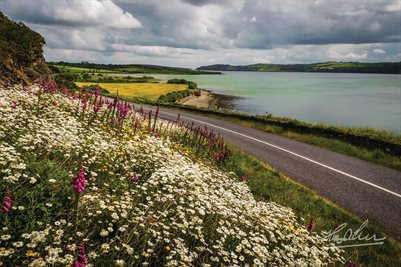 """Wildflowers along Ireland's Shannon Estuary"" (POSTER)"