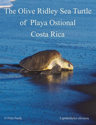 The Olive Ridley Sea Turtle of  Playa Ostional, Costa Rica