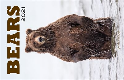 2021 Bears Calendar