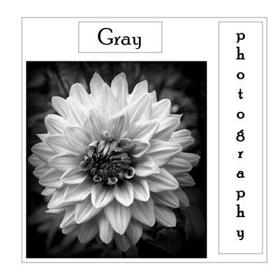 Gray Photography